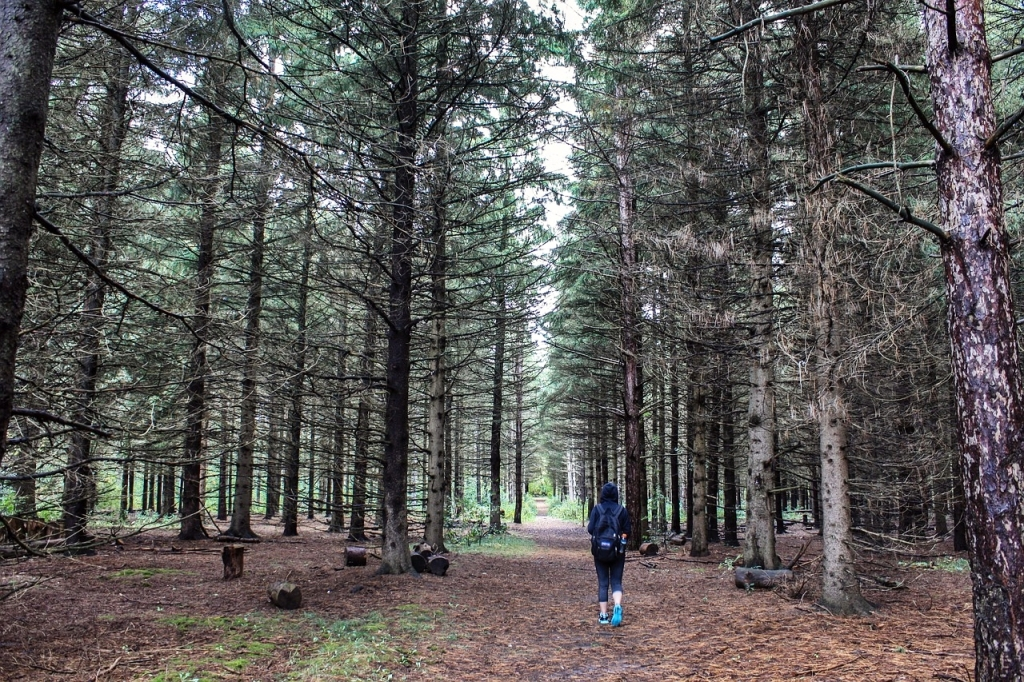 spacer las odchudzanie aktywnosc fizyczna